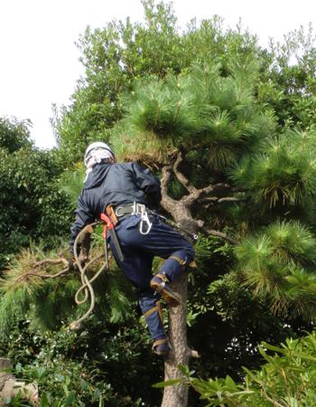 戸建の樹木伐採1