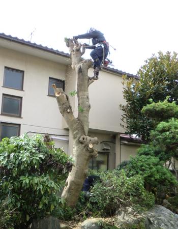 戸建の樹木伐採4